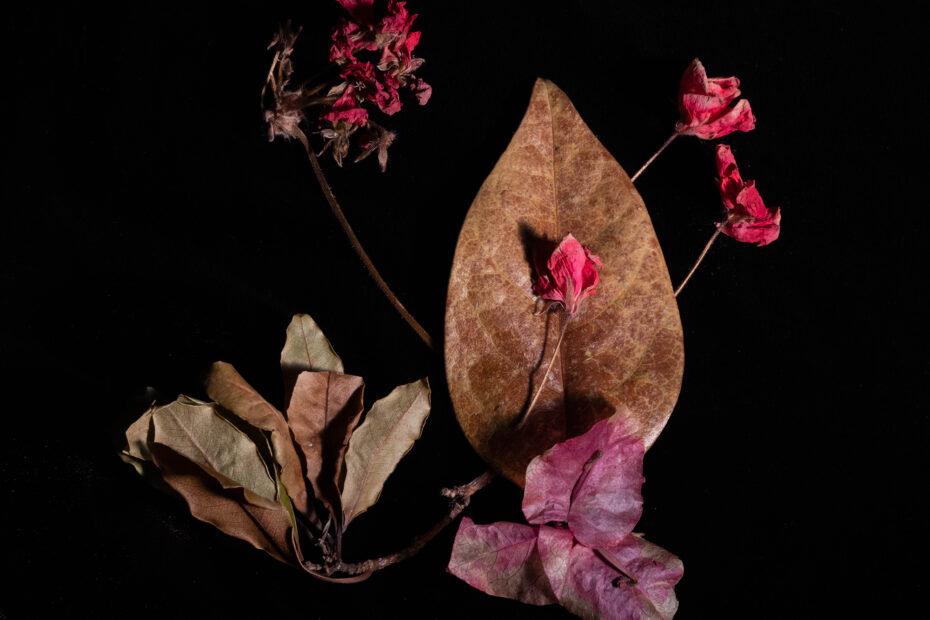 Leaf, flowers on a black background