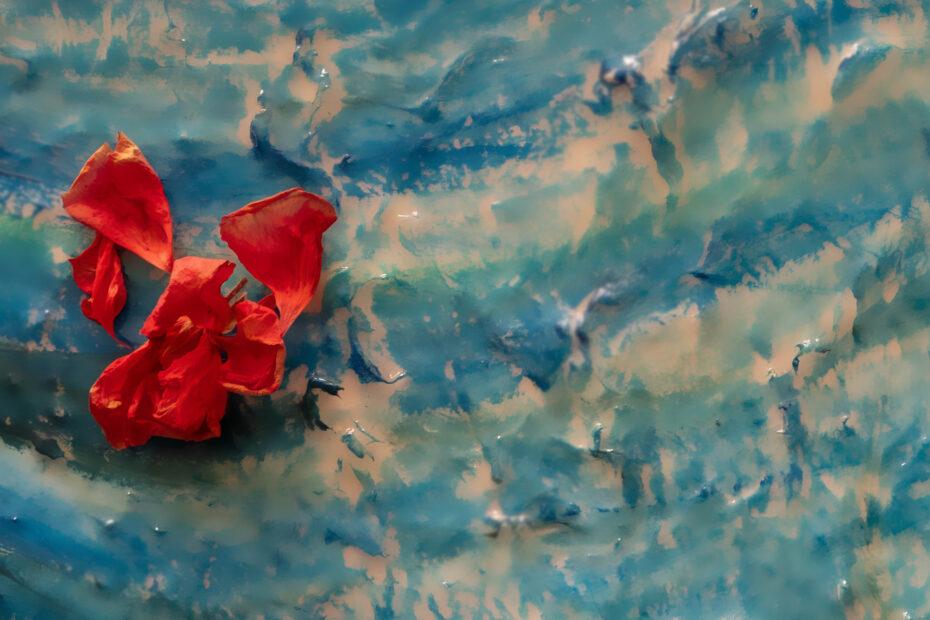 Petals on water